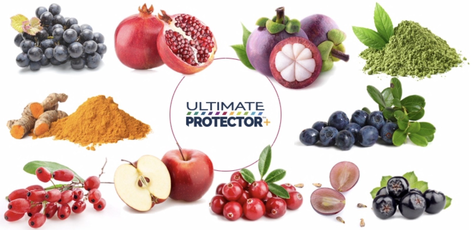 plant-based antioxidants nrf2 activators ultimate protector+